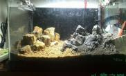 鱼缸造景新手造景 水草缸木化石、青龙石---求指导