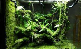 箭毒蛙加雨林缸鱼缸水族箱