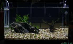 水草造景开了个45CM的小草缸4月15日更新一张成长图