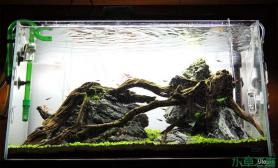 水草造景60cm水草缸--乌托邦