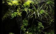 非常漂亮的一个热带雨林缸养着几只箭毒