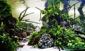 总是羡慕其他人的水草缸水草缸这个造景貌似也不是太难吧