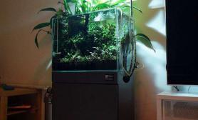 满眼的绿水草缸这是水草缸和花盆的结合体吗?