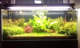 水草造景《家》开缸2月求围观