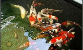 溶氧量对观赏鱼的影响