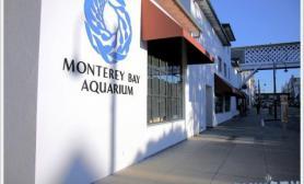 加利福尼亚MONTEREYBAYAQUARIUM水族馆