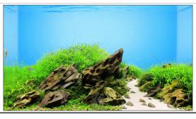 沉木青龙石水草造景45CM及以下尺寸设计23