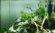 水草造景造一虾缸
