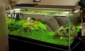 水草造景修剪之前发下状态鱼缸水族箱