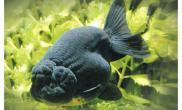 介绍盐NaCL对鱼类的影响