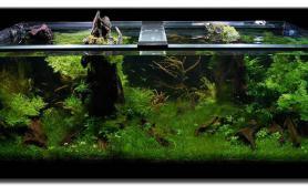 沉木青龙石水草造景150CM及以上尺寸设计32