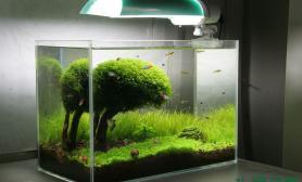 【分享】迷你矮+迷你牛毛+杜鹃根+三角莫斯=这片简单的绿色房间