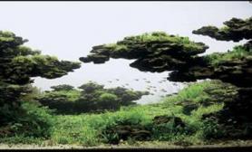 鱼缸造景2001-2015年ADA冠军作品欣赏鱼缸水族箱鱼缸水族箱鱼缸水族箱