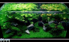 沉木青龙石水草造景60CM尺寸设计06
