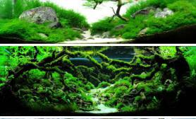 2012年ADA世界水草造景大赛冠军作品