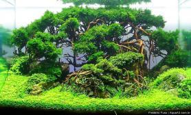石景MOSS莫丝树水草造景开缸全过程