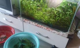 水草造景翻缸水草缸养虾水草缸养水中