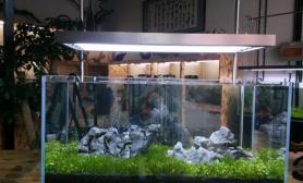水草造景这个叫遇见鱼缸水族箱