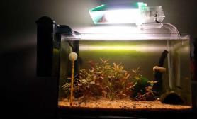 水草造景搞了个小草缸水草缸请大家给指点下