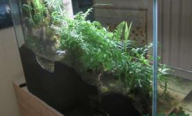 水族箱造景48cm的水陆缸