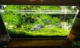 60的小缸翻缸了水草缸手机渣画质海涵
