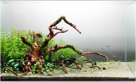 水草缸造景沉木水草泥化妆砂青龙石18CM尺寸设计18