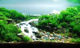 冰川流域造景水草缸漂亮吧
