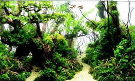 水草生态缸