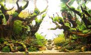 原创造景鉴赏]2014ADA参赛作品《归巢》作品排名27