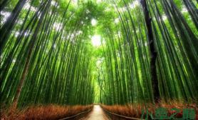 十个最美的树隧道水草缸造景可引用
