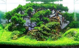 转:石景莫丝树水草造景开缸全过程