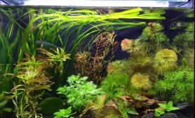 水草造景新人报到水草缸从菜地到造景