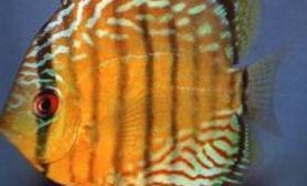 知识鱼缸水的硬度什么意思