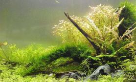 水草造景60缸滿月