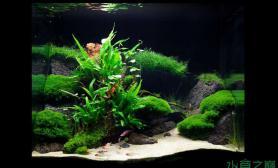 水族箱造景一个有层次的水草造景