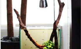 水草造景沉木老长的水草缸