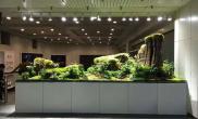 水草造景我们在福州长乐机场的作品