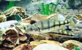这是什么鱼?