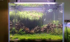 60*40*40缸水草缸感觉差点什么沉木杜鹃根青龙石水草泥