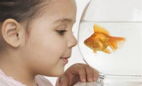 研究称鱼通过水波形识别食物(图)
