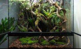 水草造景水陆缸造景图片