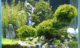 将近四个月了水草缸40小缸终于成景
