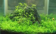 水草造景【水草造景篇】小小世界水草缸一切归于自然鱼缸水族箱