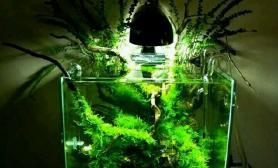 狂野小草鱼缸水族箱