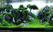 [原创]鱼缸造景图片