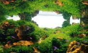 鱼缸水草造景鱼缸水草造景沉木杜鹃根 Ⅱ
