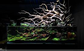 国外精品水景店LSR Aquarium