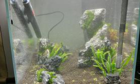 帮人开了个40方水草缸心里总是不太舒服水草缸大家给点意见