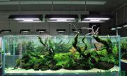 水草造景鱼缸沉木造景图片