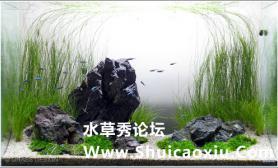 60cm水草缸造景欣赏